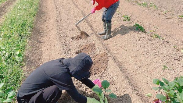 長門市日置(ひおき)農業女子